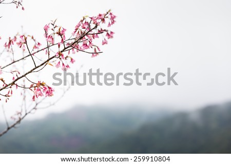 Spring blooming pink cherry on the sky background - stock photo