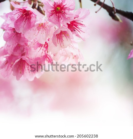 Spring blossom  - stock photo