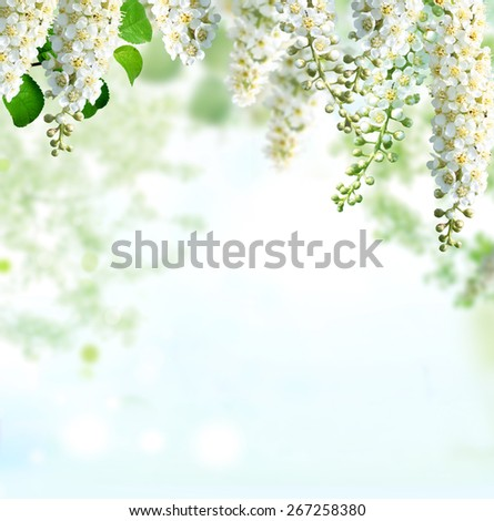 Spring blossom background - stock photo