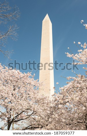 Spring Blossom Festival in Washington DC