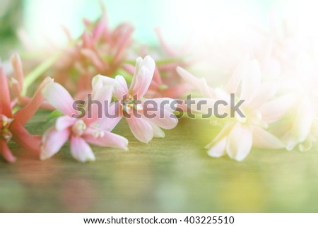 spring blossom flower background in soft blur vintage tone
