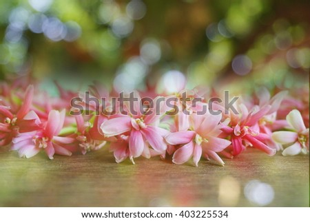 spring blossom flower background in soft blur vintage tone  - stock photo