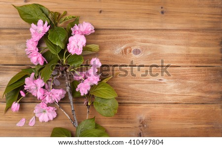 Spring Blossom Flowers over Wooden Background