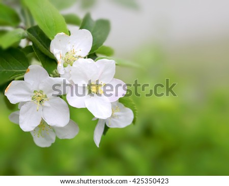Spring blossom on green blurred background