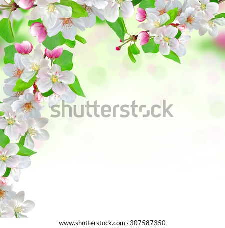 spring blossom on nature background - stock photo