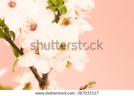 Spring blossom on pink background