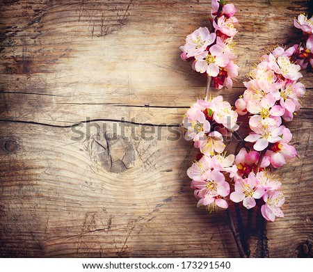 Spring Blossom over wood background. Spring Flowers on wooden background - stock photo