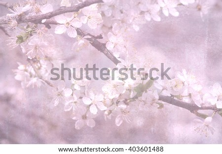 Spring blossoming apple-tree or cherry branches. Springtime background. Close up. - stock photo