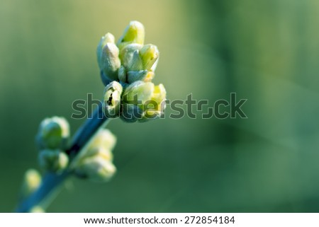 Spring blossoming buds - stock photo