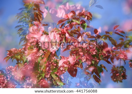 Spring blossoming of cherry against the blue sky. - stock photo
