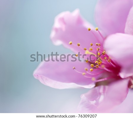 Spring blossoms on blue background - stock photo