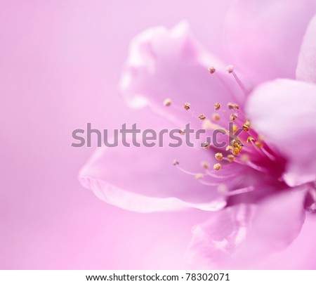 Spring blossoms on pink background