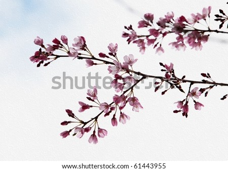 Spring blossoms on white wall texture - stock photo