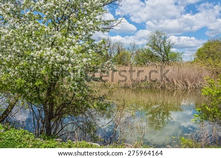 Spring blossoms overlooking the wetlands in this wildlife refuge in Tinicum Pennsylvania. - stock photo