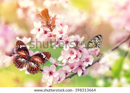 Spring blossoms with butterfly, close-up. - stock photo