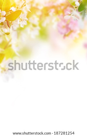 Spring border background with beautiful blossom - stock photo