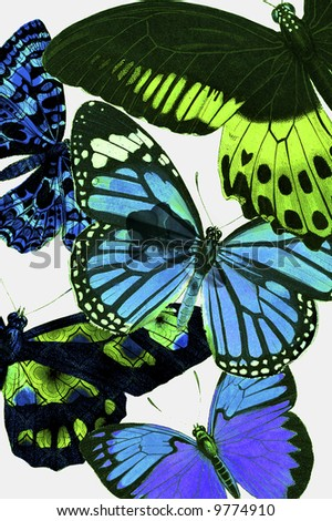 Spring botanical butterfly wallpaper design. - stock photo
