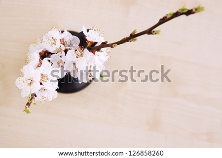 spring bouquet of blooming apricot top view - stock photo