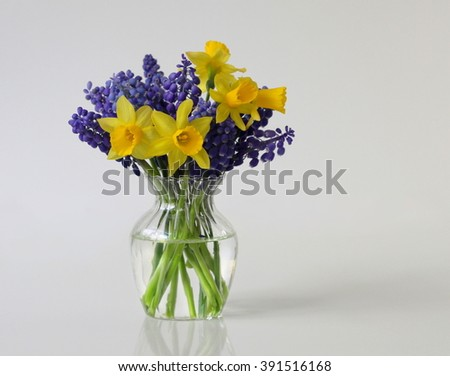 Spring bouquet of daffodils and grape hyacinth flowers in a vase. Spring decoration with narcissus and muscari flowers. - stock photo
