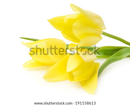 Spring bouquet of yellow tulips isolated on the white background.
