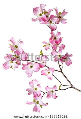 spring  branch with flowers