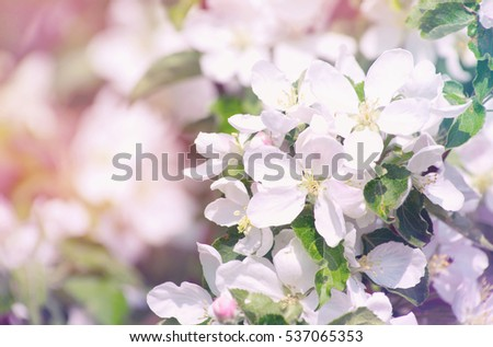 spring branch with white flowers