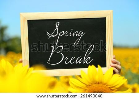 Spring break concept. Blackboard in hands on sunflower field background - stock photo