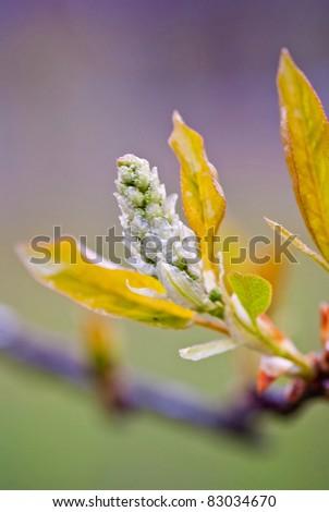 Spring Bud - stock photo
