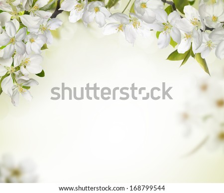 Spring cherry blossom backgrounds,copy space for your text.