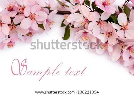spring cherry blossom, close up - stock photo
