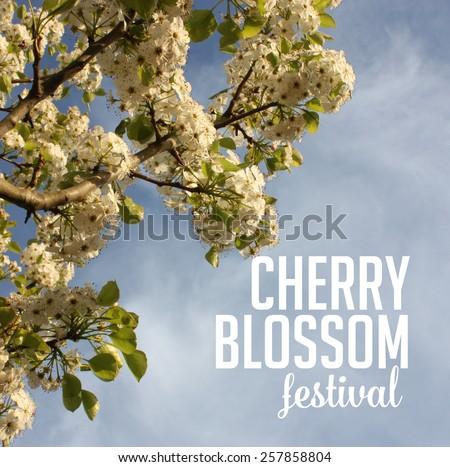 Spring cherry blossom festival Background royalty free stock photo for greeting card, ad, promotion, poster, flier, blog, article, social media, marketing, florist, garden center, gardening, nursery - stock photo