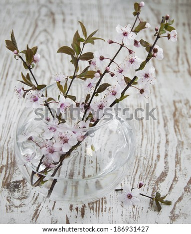 Spring Cherry blossom in a glass vase