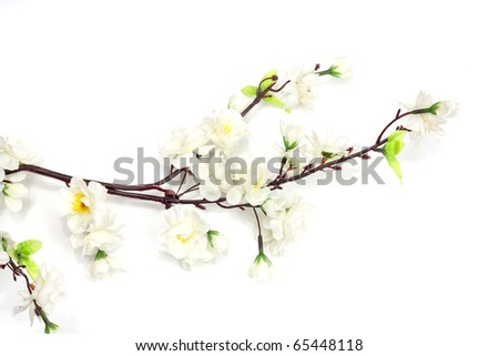 Spring cherry blossom on the white background - stock photo