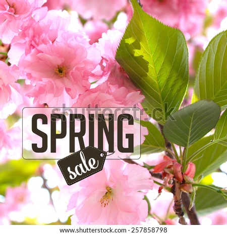 Spring cherry blossom sale Background royalty free stock photo for greeting card, ad, promotion, poster, flier, blog, article, social media, marketing, florist, garden center, gardening, nursery - stock photo