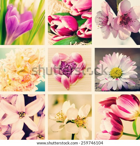spring collage from pink flowers