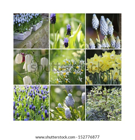 Spring collage with muscari and narcissus