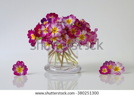 Spring colorful primula, primrose, polyanthus flowers. Floral still life with bouquet of spring primula flowers in a vase. - stock photo