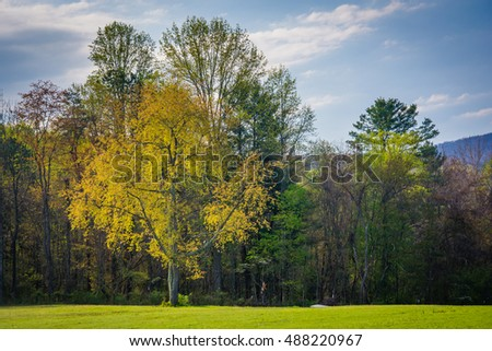 Spring colors on trees in the rural Shenandoah Valley of Virginia.