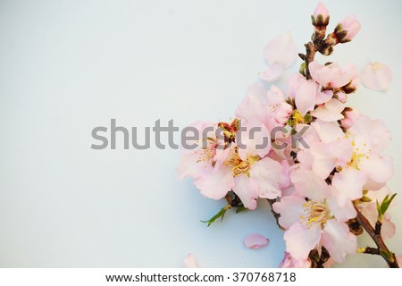 Spring concept. Almond flowers. - stock photo