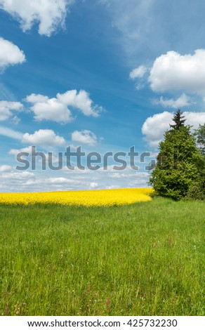 Spring countryside with green meadow, spruce tree, yellow blooming rapeseed field and blue sky with white clouds. Farmland in Czech Republic, Europe. - stock photo