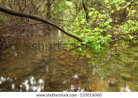 Spring creek and fig trees in a natural oasis. National reserve, Top Galilee, Israel - stock photo