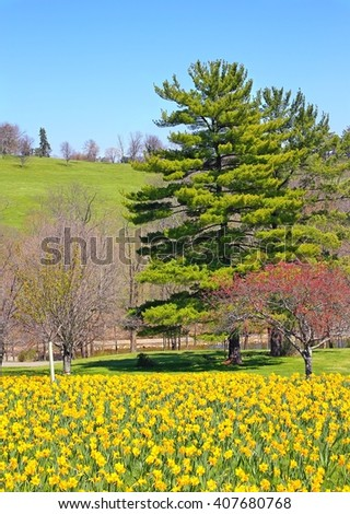 Spring Daffodils In A Country Landscape - stock photo