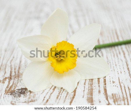 Spring   Daffodils  on a old wooden  Background