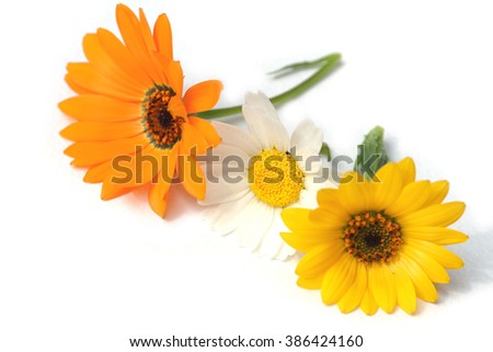 spring daisy flower assortment in the white
