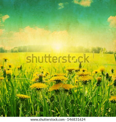 Spring dandelion field and sunlight. Grunge photo. - stock photo