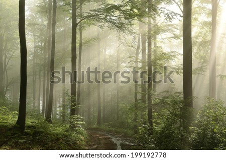 Spring deciduous forest after rainfall on a sunny morning. - stock photo