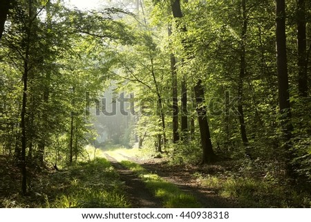 Spring deciduous forest at dawn. - stock photo