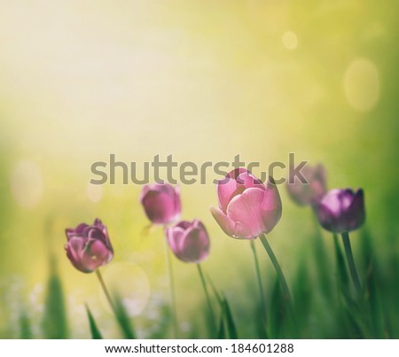 Spring Easter background. Purple tulips. Spring flowers - stock photo