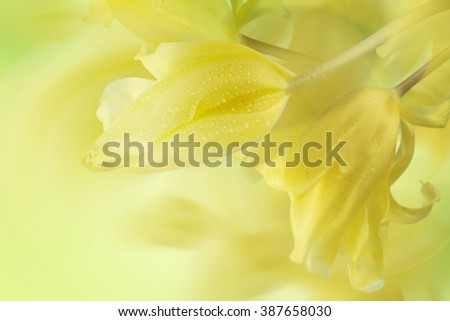 Spring Easter background with beautiful yellow tulips - stock photo