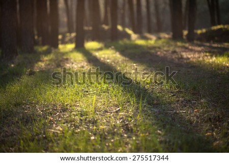Spring evening in the forest. Shallow depth of field - stock photo
